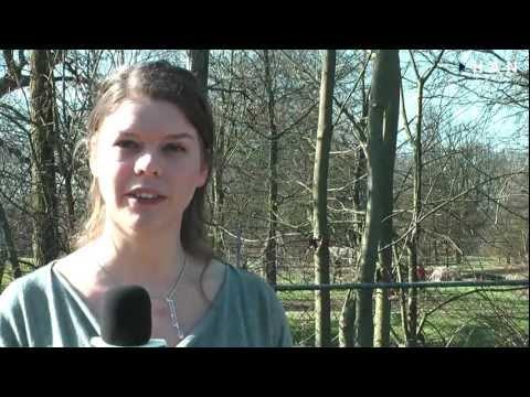 Videoblog: Oproep voor verkiezingen Studentenraad HAN
